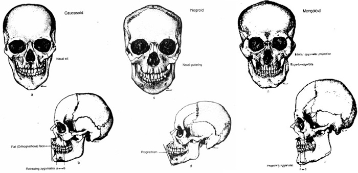 skullshapes3